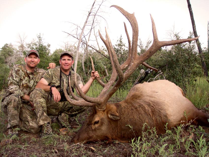 Park-Bull-elk